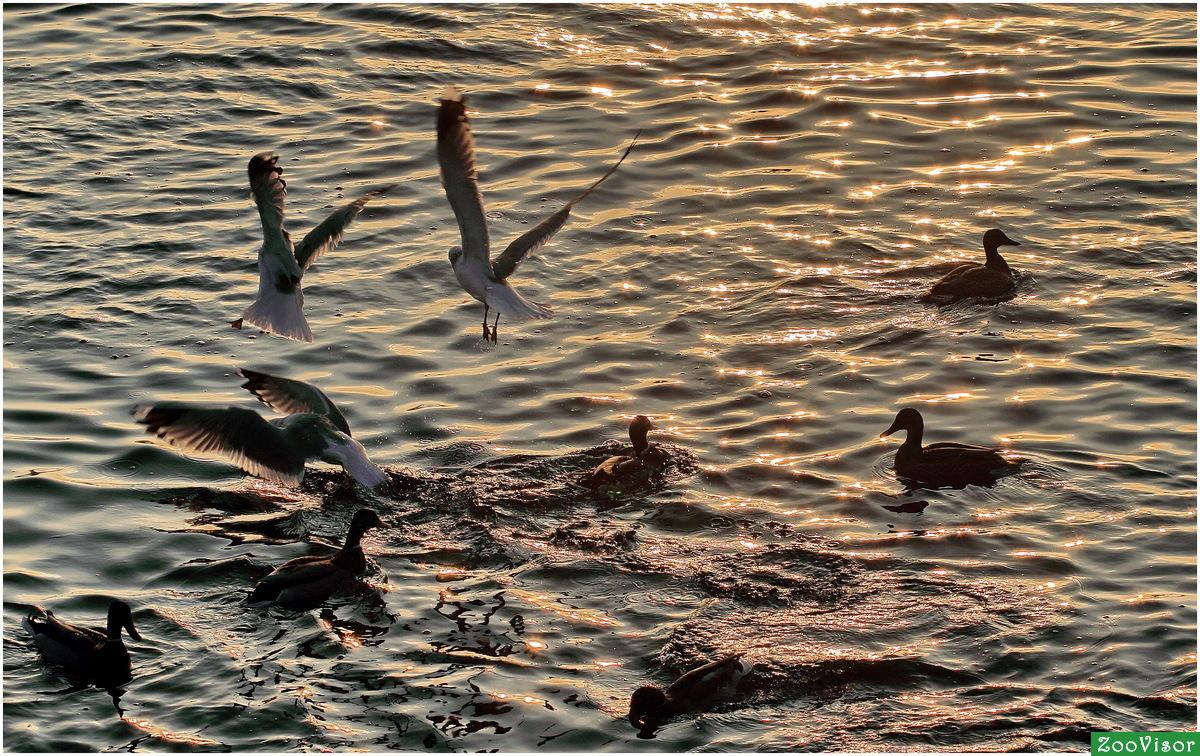 Утки и чайки фото