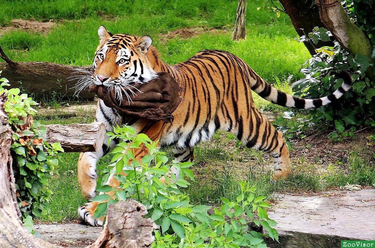 с в зоопарке животными картинки